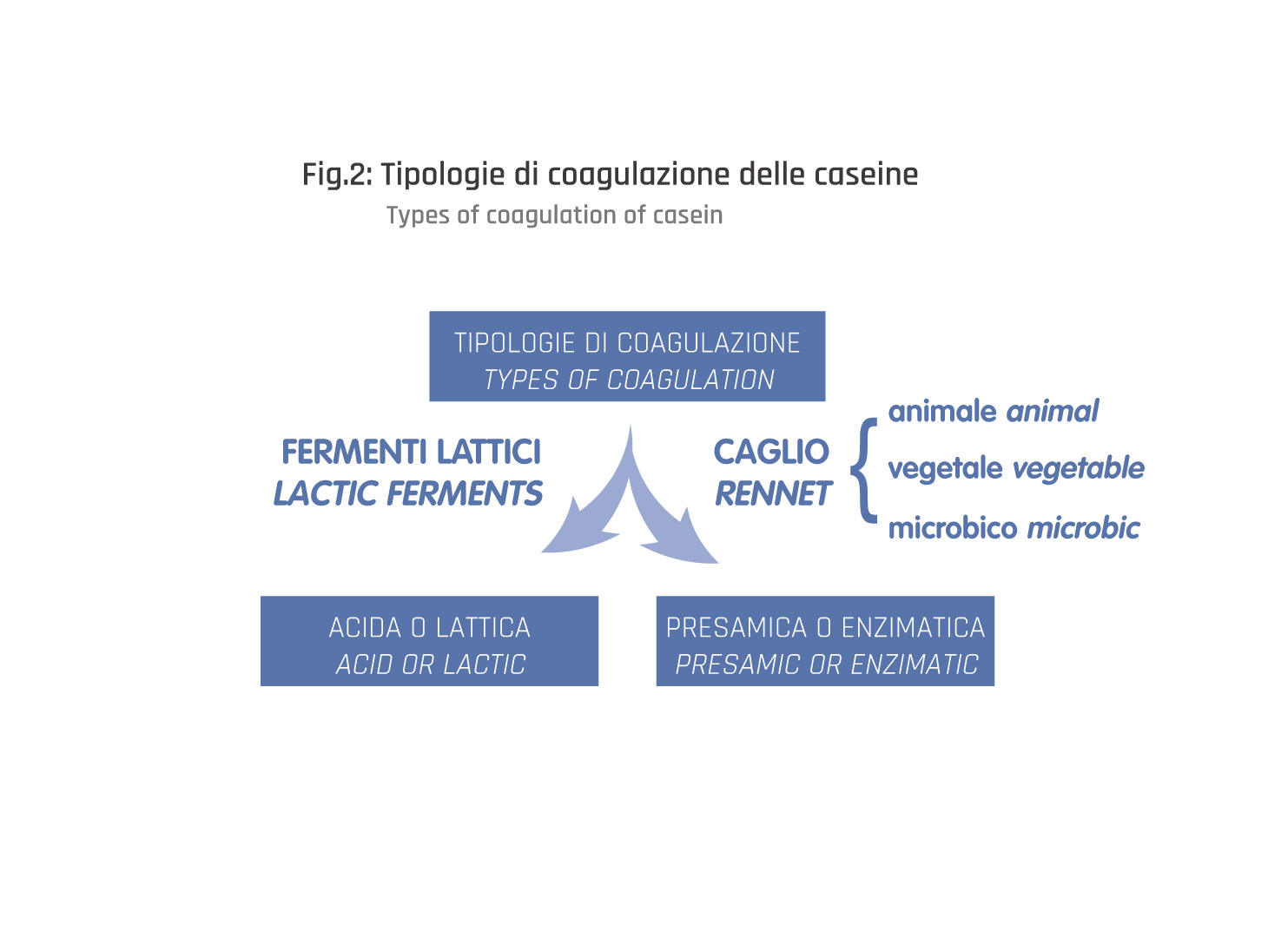 Schema tipologie di coagulazione