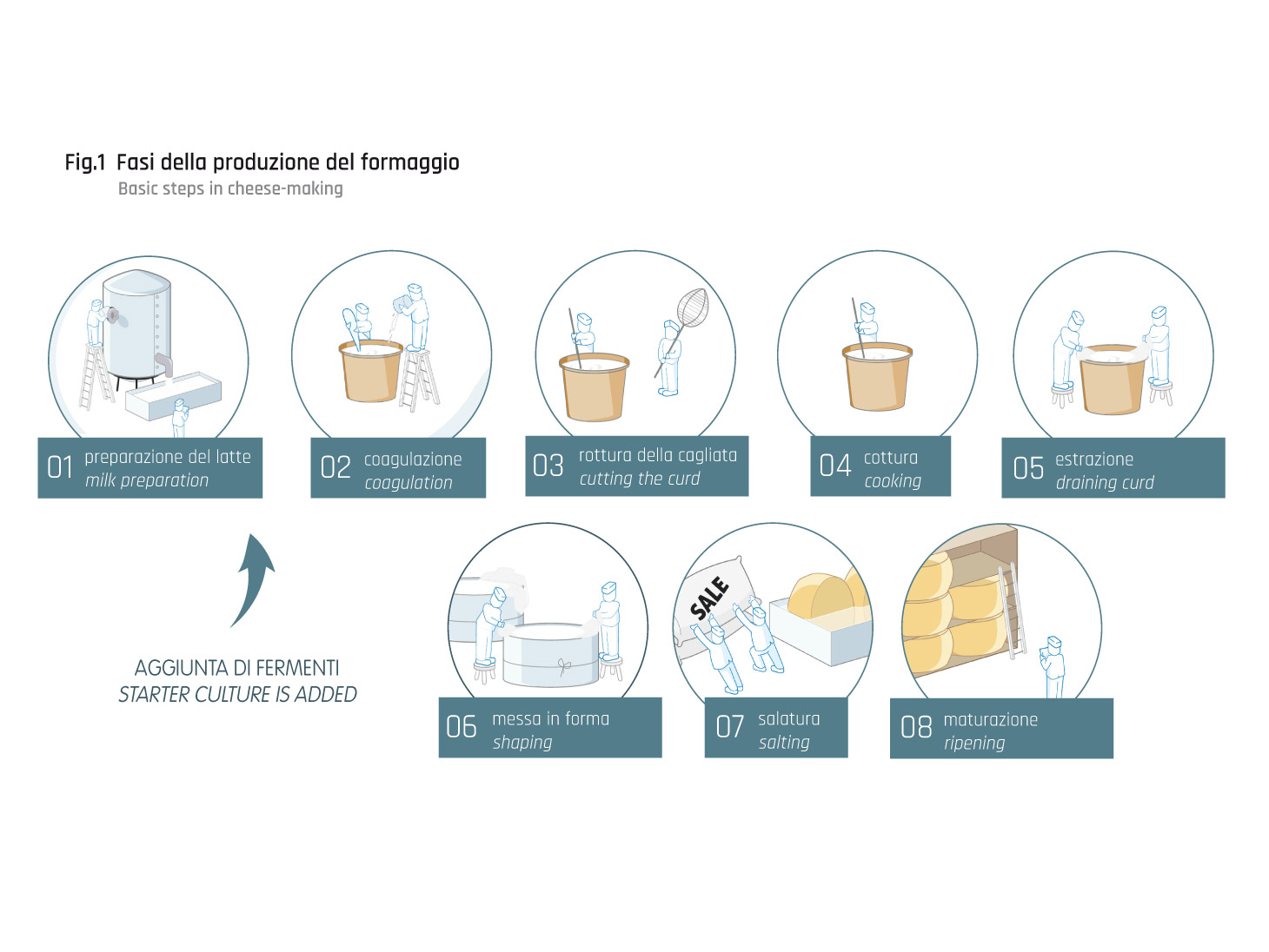 Cheese: production steps